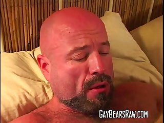 Big bear dick pounding hunks ass
